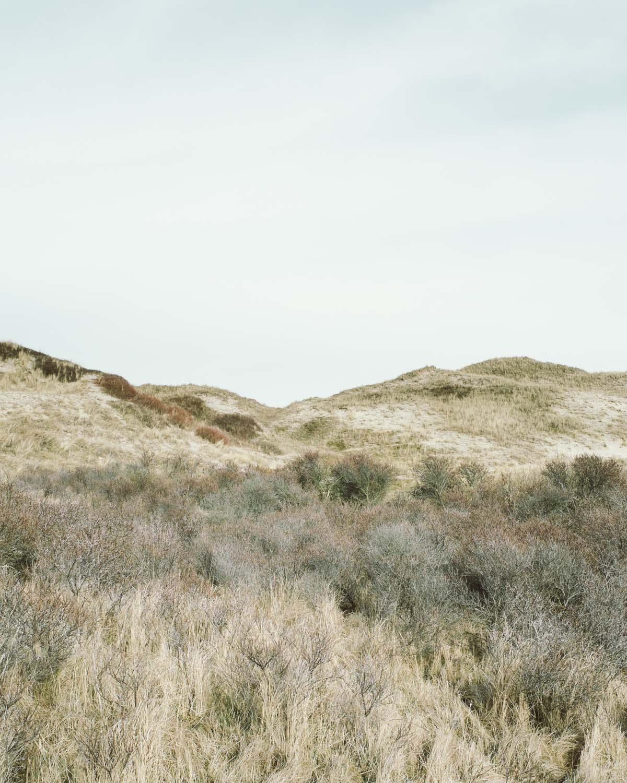 egmond aan zee braun grau grün landschaft dünen sand himmel niederlande urlaub