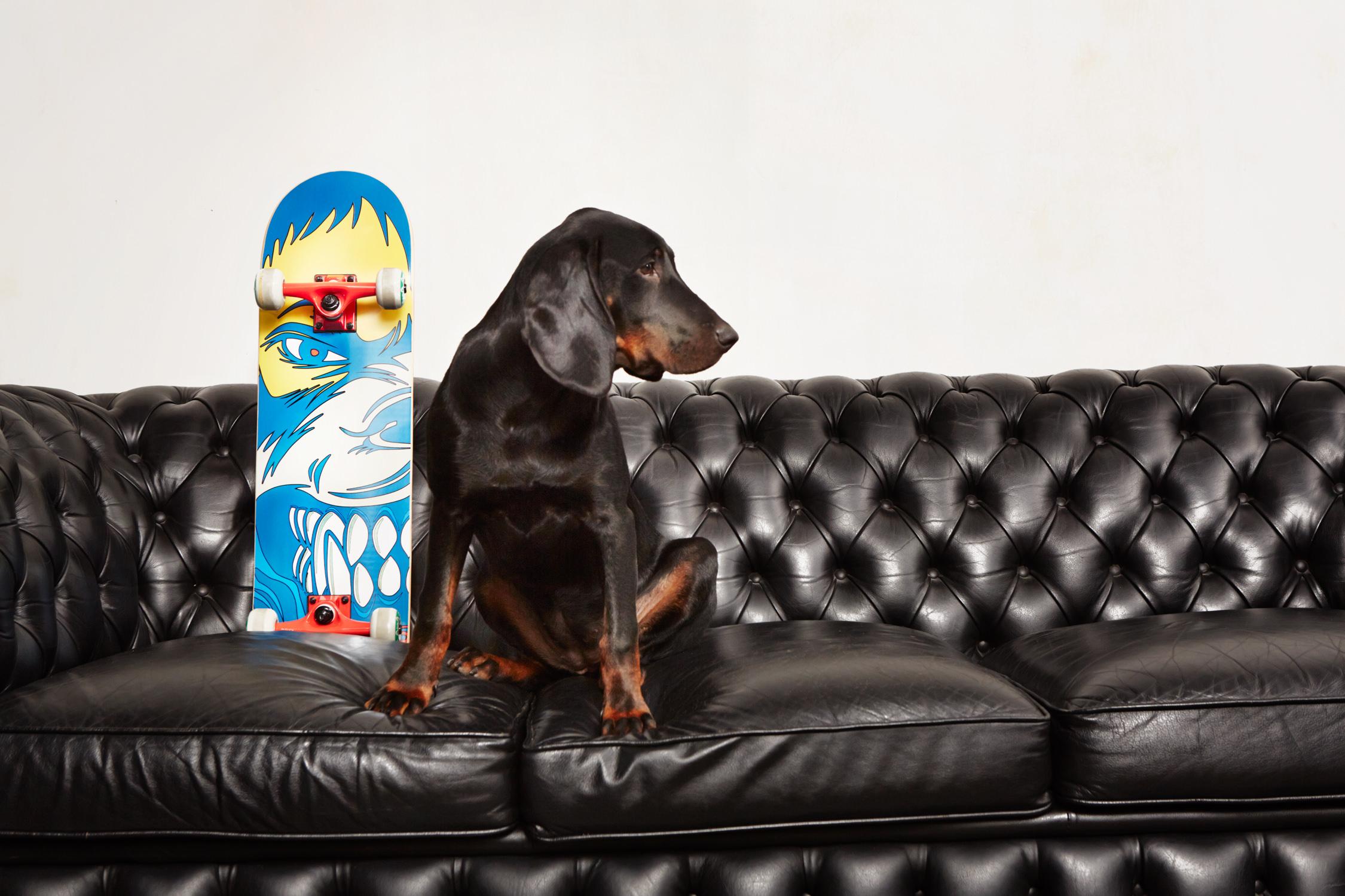area fun4u sports hund sofa bunt ledersofa leder skatebaords Jörn Strojny